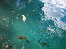 Flora i fauny Plitvice jezior park narodowy lub nacionalni Plitvicka parkowy jezera, UNESCO naturalny ?wiatowe dziedzictwo zdjęcie stock