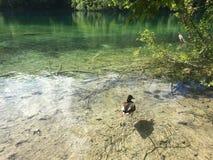Flora i fauny Plitvice jezior park narodowy lub nacionalni Plitvicka parkowy jezera, UNESCO naturalny ?wiatowe dziedzictwo fotografia royalty free