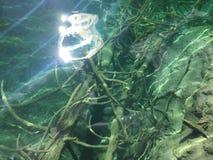 Flora i fauny Plitvice jezior park narodowy lub nacionalni Plitvicka parkowy jezera, UNESCO naturalny ?wiatowe dziedzictwo obraz royalty free