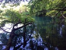 Flora i fauny Plitvice jezior park narodowy lub nacionalni Plitvicka parkowy jezera, UNESCO naturalny ?wiatowe dziedzictwo zdjęcia royalty free