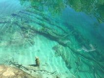 Flora i fauny Plitvice jezior park narodowy lub nacionalni Plitvicka parkowy jezera, UNESCO naturalny ?wiatowe dziedzictwo obrazy stock