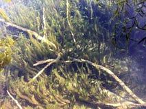 Flora i fauny Plitvice jezior park narodowy lub nacionalni Plitvicka parkowy jezera, UNESCO naturalny ?wiatowe dziedzictwo zdjęcia stock