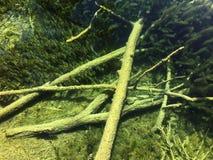 Flora i fauny Plitvice jezior park narodowy lub nacionalni Plitvicka parkowy jezera, UNESCO naturalny ?wiatowe dziedzictwo fotografia stock