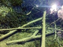 Flora i fauny Plitvice jezior park narodowy lub nacionalni Plitvicka parkowy jezera, UNESCO naturalny ?wiatowe dziedzictwo obraz stock