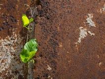 Flora indesejável no oxidado velho Imagens de Stock