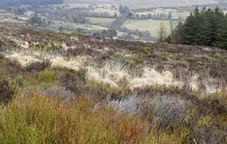 Flora of Ireland. Nature Reserve. Landscape in the mountains royalty free stock photo