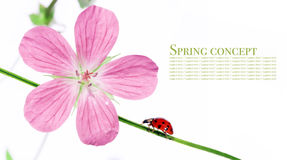 Flora and lady bug. Spring concept. flora and lady bug against white background royalty free stock image
