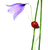 Flora and ladybird Royalty Free Stock Photography