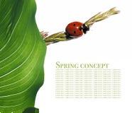 Flora and ladybird Stock Image