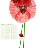 Flora and ladybird. Spring concept. flora and ladybird against white background royalty free stock photography