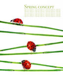 Flora and ladybirds. Spring concept. flora and ladybirds against white background Stock Photos
