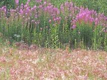 Flora Landscape de Alaska Imagen de archivo libre de regalías