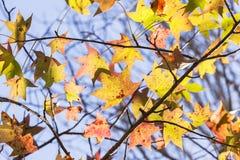Flora Leaves Colors Tree Arkivbild