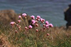 Flora litoral e fauna Fotografia de Stock