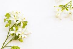 Flora local do jasmim da flor branca do estilo do cartão do arranjo de Ásia imagem de stock