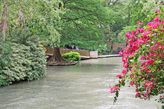 Flora lujuriante en San Antonio River Foto de archivo libre de regalías