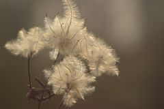 Flora, Macro Photography, Close Up, Feather Royalty Free Stock Images