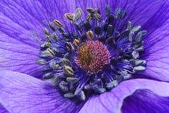 Flora a macroistruzione immagini stock