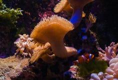 Flora marina y fauna, Fotos de archivo