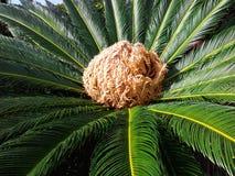 Flora mediterránea Imagen de archivo libre de regalías