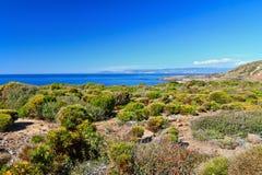 Flora mediterrânea - Carloforte Foto de Stock Royalty Free
