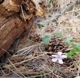 Flora na floresta imagens de stock royalty free
