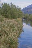 Flora no rio Sarca imagem de stock royalty free
