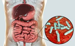 Flora normale dell'intestino crasso, batteri Bidifobacterium royalty illustrazione gratis