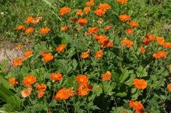 Flora och faunor Royaltyfria Foton