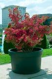 Flora och staden Royaltyfria Bilder