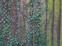 Flora On Old Garden Fence Royalty-vrije Stock Foto's