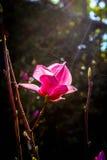 Flora onder zonneschijn stock foto's