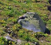 Flora op de helling van Onderstel Elbrus stock fotografie