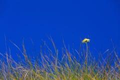 Flora op de helling van Onderstel Elbrus in de Noord-Kaukasus stock afbeelding