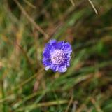 Flora op de helling van Onderstel Elbrus in de Noord-Kaukasus royalty-vrije stock afbeeldingen