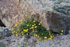 Flora op de helling van Onderstel Elbrus in de Noord-Kaukasus stock foto