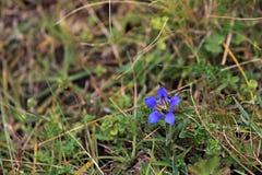 Flora op de helling van Onderstel Elbrus in de Noord-Kaukasus royalty-vrije stock foto's