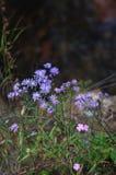 Flora op de helling van Onderstel Elbrus in de Noord-Kaukasus stock afbeeldingen