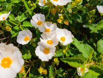 Flora Otacza Sunnyvalle obraz royalty free