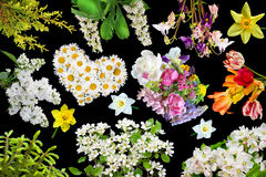 Flora på svart Royaltyfria Bilder