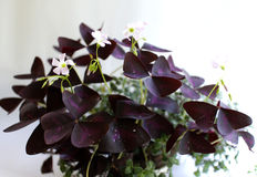 Flora púrpura Fotografía de archivo