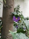 Flora púrpura foto de archivo libre de regalías