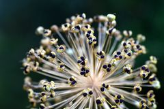Flora, Plant, Flower, Macro Photography Stock Photos