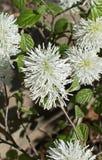 Flora, Plant, Flower, Subshrub royalty free stock image