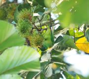 Flora, Plant, Leaf, Tree stock photography
