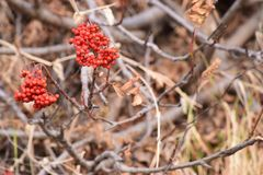 Flora, Plant, Spring, Berry royalty free stock images