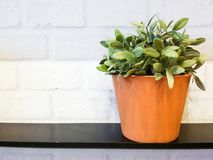 Flora in a pots. Royalty Free Stock Photography