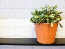 Flora in potten royalty-vrije stock fotografie