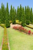 Flora real ajardinada Ratchaphruek do jardim Imagem de Stock