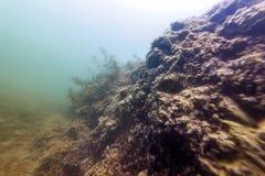 Flora Rivers de ?gua doce subaqu?tica, lagos, lagoa, flora subaqu?tica fotografia de stock